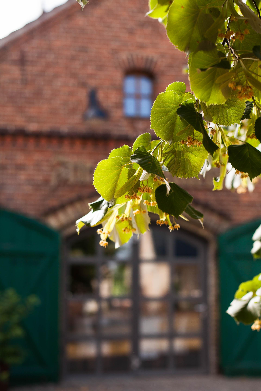 Lindenblüten vor der Restauration Alte Schmiede Zepernick